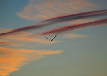 No es un pajaro no es un avion Es un coche volador 350x250 - Noticias