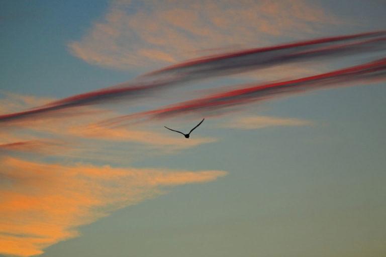 No es un pajaro no es un avion Es un coche volador 768x512 - No es un pájaro, no es un avión… ¡Es un coche volador!