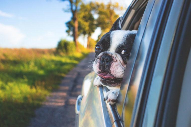 Recomendaciones para viajar en coche con tu mascota 768x511 - Recomendaciones para viajar en coche con tu mascota
